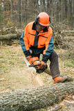 Forestry worker with chainsaw is sawing a log. Process of loggin. Forestry worker with chainsaw is sawing a log. Sample of works on forest logging Stock Photos