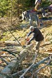 Forestry worker - lumberjack with chainsaw cuts branche. In forest after calamity royalty free stock photo