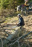 Forestry worker - lumberjack with chainsaw cuts branche. In forest after calamity stock photos