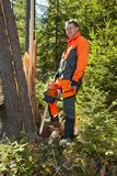 Forestry worker - lumberjack works with chainsaw. He cuts a big tree broken by wind calamity in forest. Lumberjack has protective clothes royalty free stock image