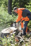 Forestry worker - lumberjack works with chainsaw. He cuts a big tree broken by wind calamity in forest. Lumberjack has protective clothes stock photography