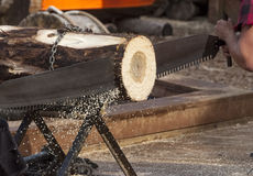 Forestry worker. Man sawing log with a two hands saw stock photo