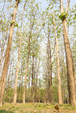 Forests Stock Images