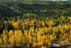 Forests. Colorful autumn view of aspen, fir and pine forests in rocky mountain, kananaskis country, alberta, canada Royalty Free Stock Photo