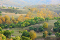 Forests. On the mountains in the autumn Royalty Free Stock Photo