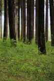 Forest beings many thing stock image