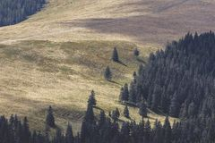 Forests and alpine pastures. In the Oriental Carpathians of Romania Royalty Free Stock Photography