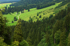 Forests in alps. Forests in the alps mountains Stock Image
