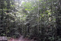 Forests. In the amazonas   AMAZONAS, COLOMBIA Royalty Free Stock Image