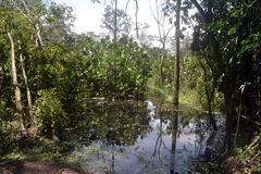 THE Forests. In the amazonas AMAZONAS, COLOMBIA Royalty Free Stock Photography