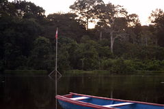 THE Forests. In the amazonas AMAZONAS, COLOMBIA Royalty Free Stock Images