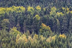 Stolowe Mountains in Poland. Forests around Szczeliniec Wielki massif in Table Mountains National Park, Sudetes in Poland Stock Photography