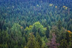 Stolowe Mountains in Poland. Forests around Table Mountains in Sudetes, view from Bird Mount near Karlow village Royalty Free Stock Photography