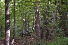 Forests around the village -Počúvadlo. Počúvadlo is a village and municipality in Banská Štiavnica District, in the Banská Bystrica Region stock images