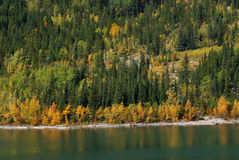 Free Forests At Lakeside Royalty Free Stock Photos - 6939428