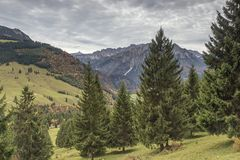 In the forests of Bad Hindelang. Near the Oberjoch Pass Royalty Free Stock Photography