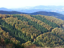 Forests in Beskydy Stock Images