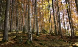 Forests with colors. The beautiful forests, with the lively coloti of the autumn Stock Photography