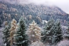 The forests covered by the first snow. So much desired snow comes to the mountains and the woods stock image