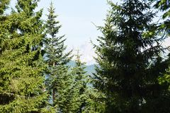 Forests of Dolomiti mountains royalty free stock photography