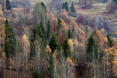 Forests in fall season Stock Photography