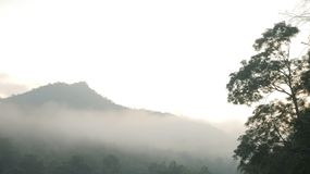 Forests with fog in front of mountain stock photos