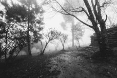 Forests at frontier Thai - Myanmar with hazy fog in winter Stock Images