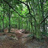 Forests in Gdansk Stock Photos