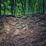 Forests in Gdansk Royalty Free Stock Photos