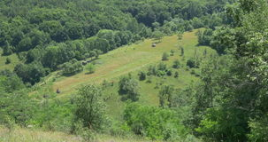 Forests and Grasslands in Summer. Beautiful relaxing view of some forests and grasslands in summer afternoon stock footage
