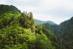 Forests on Hills Stock Photos