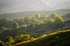 Forests on hills in summer. Landscape with green forests on rolling hill slopes Stock Photos