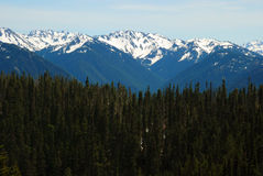 Forests of Hurricane Ridge Stock Photography