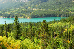 Forests at lakeside. Beautiful view of autumn mixed aspen and larch forests at lakeside in kananaskis country, alberta, canada Stock Images