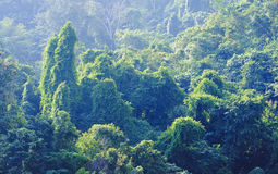 Forests in Laos in the area of the river Mekkong Stock Image