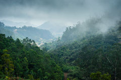 Forests of Madeira island Royalty Free Stock Photo