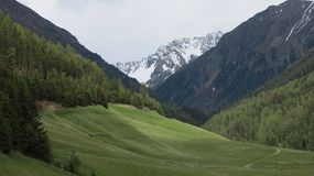 Forests and meadows in the Alps in Europe. Beautiful green idyllic Forests and meadows in the Alps in Europe and white summit of the mountains Royalty Free Stock Images