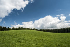 Forests and meadows Stock Photography