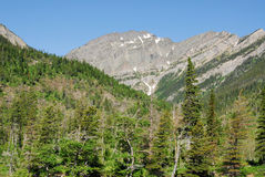 Forests and mountain Royalty Free Stock Images