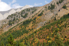 Forests on mountain slope royalty free stock images