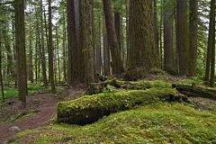 Forests of Pacific Northwest Stock Photo