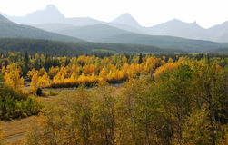 Forests in river valley. Colorful autumn view of  forests in river valley, kananaskis country, alberta, canada Stock Image