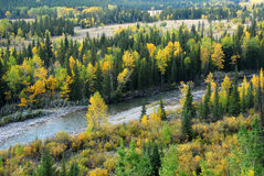 Forests in river valley. Colorful autumn view of  forests in river valley, kananaskis country, alberta, canada Royalty Free Stock Photo