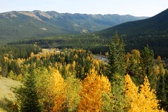 Forests in river valley. Colorful autumn view of  forests in river valley, kananaskis country, alberta, canada Stock Images