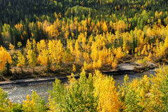Forests in river valley stock photography