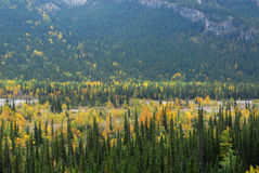 Forests in river valley Royalty Free Stock Photos