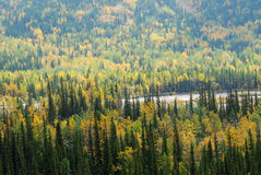 Forests in river valley Stock Image