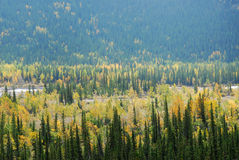 Forests in river valley. Colorful view of  autumn pine and aspen forests in river valley, kananaskis country, alberta, canada Royalty Free Stock Photography