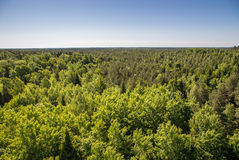 Forests of Saaremaa Royalty Free Stock Photo
