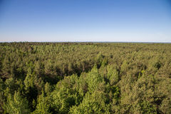 Forests of Saaremaa Stock Photography